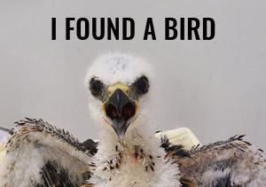 I found a bird