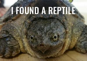 I found a reptile