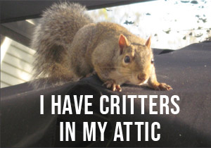 I have critters in my attic